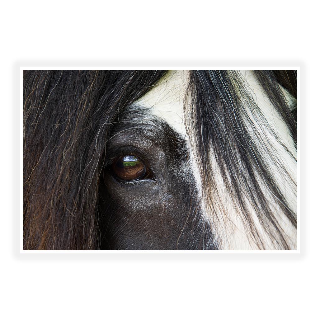 gypsy horse print