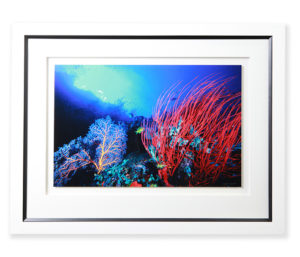 floated-image-framed