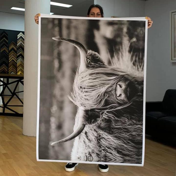 Highland Cow Photo On Canvas